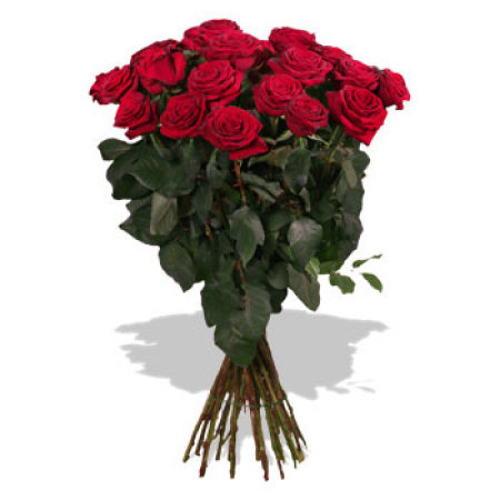 RST103  Love Bundle (1 Dozen Roses 50 cm)