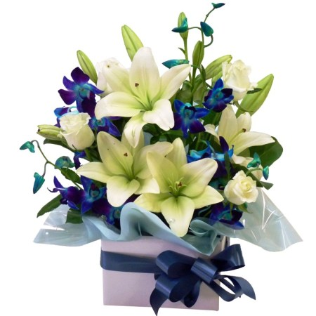 RBX175 white & blue box